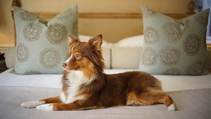 Pet friendly hotels nyc for Dog friendly hotels nyc